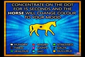 GULLIBLE! METAL SIGN 8X12 MAN CAVE FUNNY BAR DECOR COWBOY HUMOR BARN HORSE LOVER