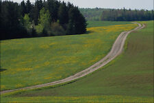 738087 Country Road A4 Photo Print