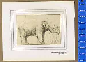 REMBRANDT: Study of an Elephant w/ Spectators -- 1906 Lithograph
