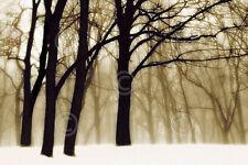 Past Dreams David Lorenz Winston Photograph Landscape Tree Print Poster 11x14