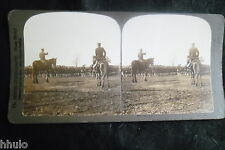 STA761 Prade chevaux Soldat Japonnais Japan albumen Photo stereoview 1900