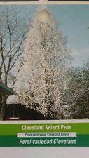 Cleveland Select Flowering Pear Tree Home Garden Plants Landscape Trees Plant