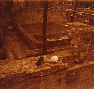 ITALIE Rome Chats Archéologie 1952Photo Stereo Plaque verre Vintage VR23L2n