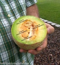 100 Rocky Ford Heirloom cantaloupe seeds. SUPER SWEET ***SAME DAY SHIPPING***