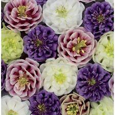 Columbine Double Flower Mix Seeds Perennial Mixed Colours Aquilegia vulgaris cv