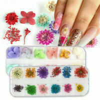 12 Grids Colors Real Dry Dried Flowers 3D Nail Art Decor Manicure Tips DIY