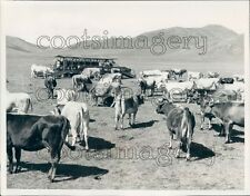 Dairy Cows Portable Milking Stall Batsumbar Farm Mongolia Press Photo
