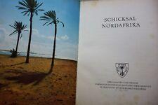 Afrika - Schicksal Nordafrika Feldzug - Militär Rommel Krieg 2. Weltkrieg - 1954