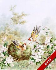 GOLD FINCHES NESTING IN APPLE TREE W BLOSSOMS PAINTING ART REAL CANVAS PRINT