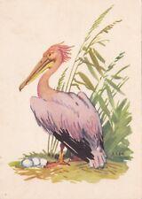 1960 Pink Pelican bird with eggs wild bird by Laptev old Russian Soviet postcard