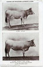 FARINE DE NUCLéINE LAVOCAT à LYON. VACHE. BOEUF. COW. BEEF.