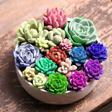 300 Pcs Seeds Mix Succulent Plants Lithops Flowers Pseudotruncatella Bonsai 2019