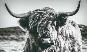 Bönninghoff Wandbild Leinwandbild Bild | Hochlandrind Rind Kuh Stier | 150x90 cm