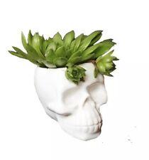 Skull Planter Pot | Plant Cactus Succulents | White Vase | Skeleton