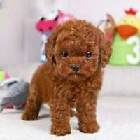 Realistic Teddy Dog Simulation Toy Dog Puppy Lifelike US Stuffed Toy X6O9