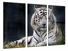 Cuadro Moderno Fotografico Tigre blanco, Animales, 97 x 62 cm ref. 26310