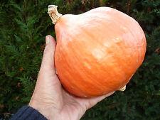15 graines POTIMARRON ROUGE  SEEDS (2 à 3kg) production France bio potimaron