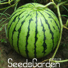 Common Watermelon Delicious Seeds Plants Chinese Fruit Garden 50pcs/pack