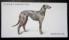SCOTTISH DEERHOUND     Superb Original Vintage Card ## VGC