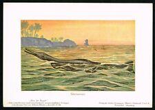 1900 Geosaurus Prehistoric Extinct Animal Marine Crocodile - Antique Print