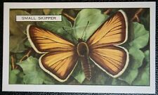Small Skipper Butterfly   Original  Vintage Colour Card # VGC