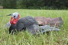 Primos® Dirty B™ Injured Gobbler Turkey Decoy Hunting Archery Jake Tom Hen