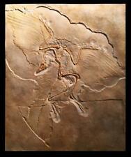 Nsf- Realistic Replica Archaeopteryx Dinosaur Replica Fossil