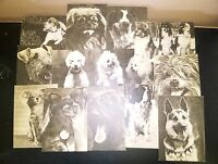 Vintage set of 17 postcards with different breeds of dogs made in USSR in 1969