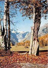 B50484 Les Alpes Pittoresques Les Bouleaux en Automne cow vache   france