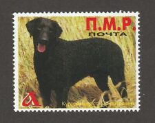 Curly-Coated Retriever *Int'l Dog Postage Stamp Art Collection*Great Gift Idea*