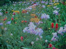 TWO POUNDS   BUTTERFLY HUMMINGBIRD 15-VARIETY 100% WILDFLOWER SEED MIX  USA ITEM