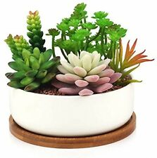 Succulent Planter, INNOTER Modern White Ceramic Cactus Flower Pot Plant Pot