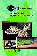 Geckos Madagaskars der Seychellen, Komoren und Maskarenen / Geckos of Madagascar, the Seychelles, Comoros and Mascarene Islands von Patrick Schönecker (2008, Gebundene Ausgabe)