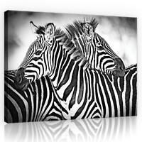 CANVAS Leinwand bilder XXL Zebra Weiss-Schwarz Bild Wandbild F05556
