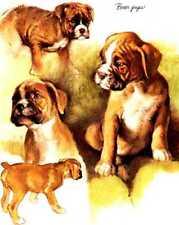 4 Boxer Pups - Vintage Dog Print - Poortvliet