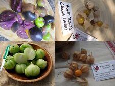 PHYSALIS PACKAGE of 4 varieties - 80+ seeds - Reduced Price!