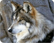 Mexican Wolf - Photo Mouse Pad - Free Personalizing!