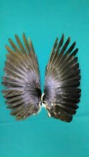Raven wings real natural Hugin Munin