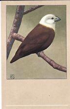 x animals birds antique old postcard bird animal white headed nun