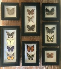 More details for framed real butterflies triple insects wall decor curio gift taxidermy