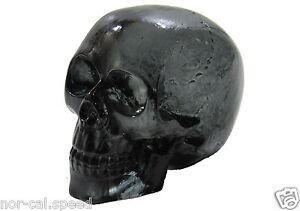 Black Clear Project Skull Plastic Halloween Skeleton Decoration Prop Walkin Dead
