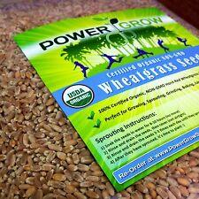 Wheat Grass / Cat Grass Seeds ~ Certified USDA Organic Amounts up to 50 LBS BULK