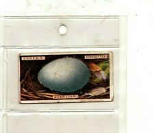 Ogdens Cigarette Card, Birds Eggs (Cut Outs) 1923, 39 Starling