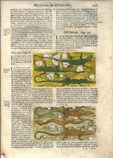 Stampa antica ERBARIO MATTIOLI MATTHIOLI LUCERTOLA SEPA 1645 Old Antique print