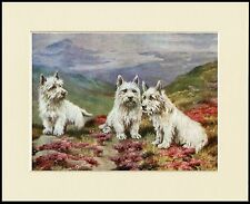 WESTIE WEST HIGHLAND WHITE TERRIER THREE DOGS DOG PRINT MOUNTED READY TO FRAME