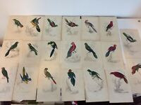 20 Antique Hand Coloured Collection of Parrokeet Prints 1833
