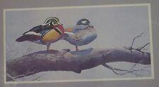 Needle Treasures Winter Retreat Birds 20x10 ColorArt Crewel Kit #0614 New