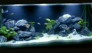 25kg Aquariumsteine Steine Alpenkalk Malawi Tanganjika