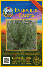 250//4000 Seeds NT of Thyme Common Cultivated Plant Aromatic Grass