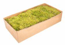 geweißt l8-10cm Bastelholz 0,25kg nella rete!!! legno radice dekoholz